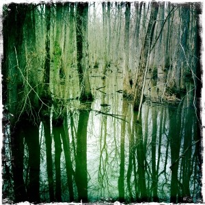 """swamp"" by vistavision. Creative Commons licence CC BY-NC-ND"